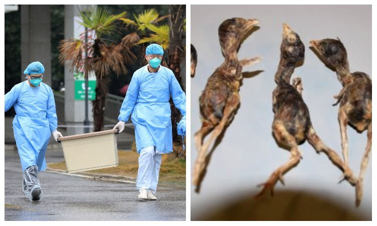 coronavirus or deadly bird flu threat